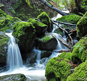 Cataract Falls, Mt. Tamalpais, Marin County, California