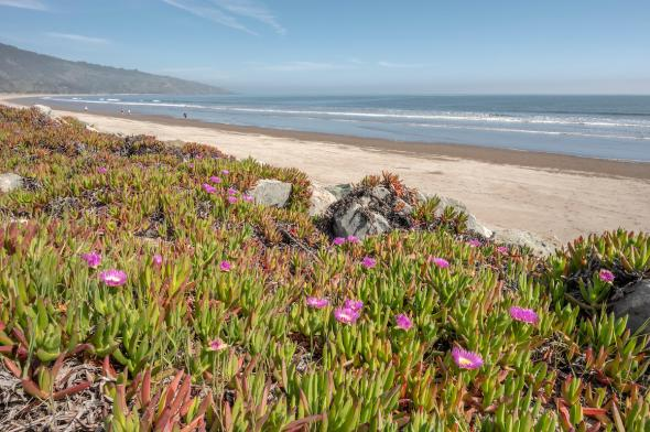 320 Seadrift Road, Stinson Beach #39